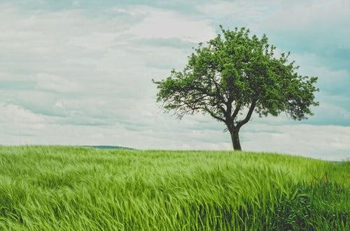 Motorne žage za sečnjo dreves
