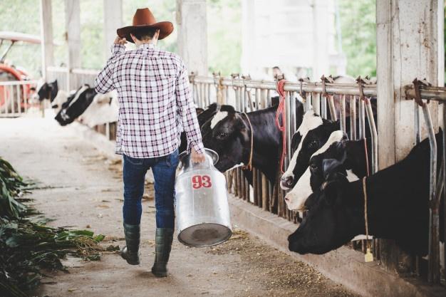 Rešetke za govedo iz betone